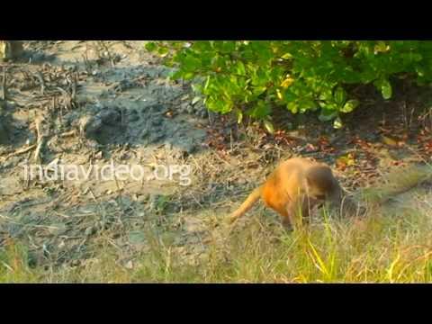 Sudhanyakhali Watchtower in Sundarbans, West Bengal
