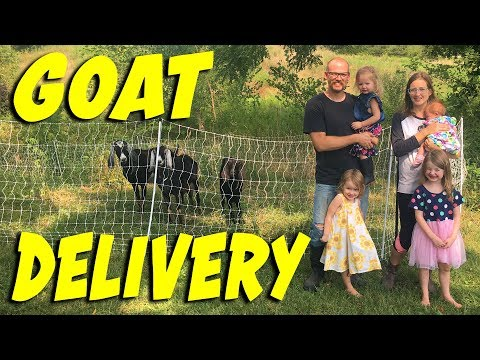 Goat Delivery to Teal House Farm