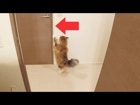 トイレでいつもより長居したら猫の反応が面白かったw