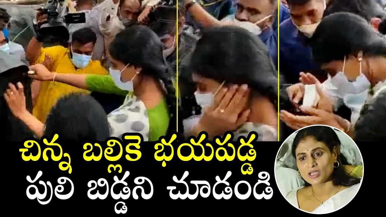 పులి బిడ్డ: YS Sharmila Scared Of Lizard | CM Jagan | KCR | Telangana Politics | Political Qube
