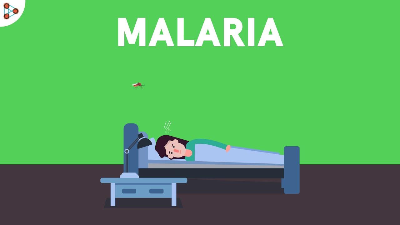 Download Malaria and Life Cycle of Plasmodium   Diseases   Don't Memorise