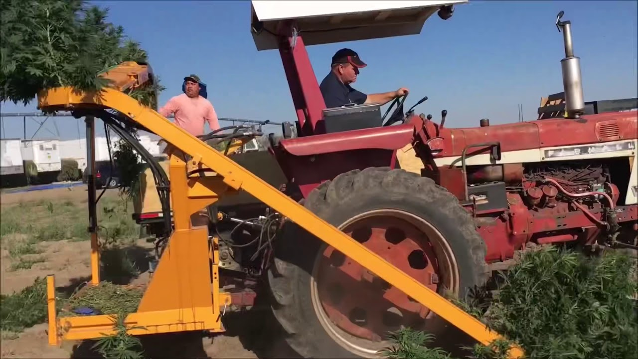 CBD Hemp Harvester - 2,200 stalks per/hr - 5-8 acres day