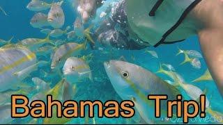 Bahamas 2015 - Swim w/ Sharks, Fish, Sea Turtle and Sting Rays
