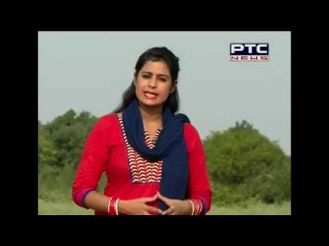 Punjab Government's Guideline on paddy sowing | PTC NEWS Special report | June 10, 2016