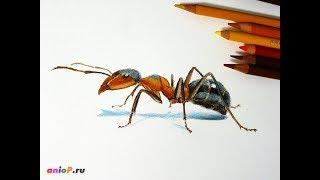 Как нарисовать муравья цветными карандашами