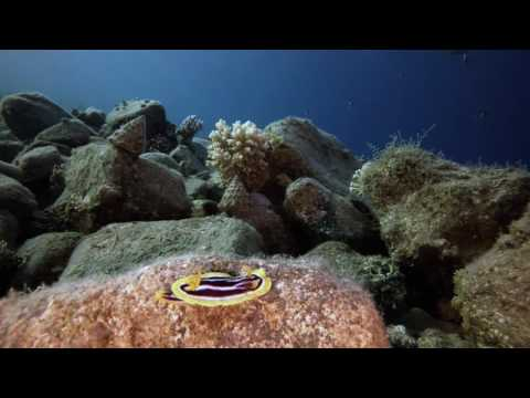 GoPro 4  underwater  / test iso 400 / 1080  60 / Red Sea / Egypt / diving / Dahab