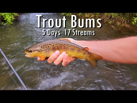 WBD -  Fly Fishing Trout Bums  Pennsylvania Tour  ( Day 1 Of 5 )  Brown Brook & Rainbow Trout
