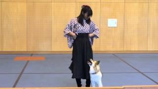神戸動植物専門学校で行われた、Dogs Lifeさんお月見ファンマッチにて。