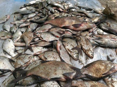 рыбалка весной на вилейском водохранилище