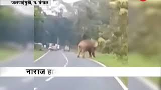 Elephant tramples tourist for taking selfie in Jalpaiguri, West Bengal