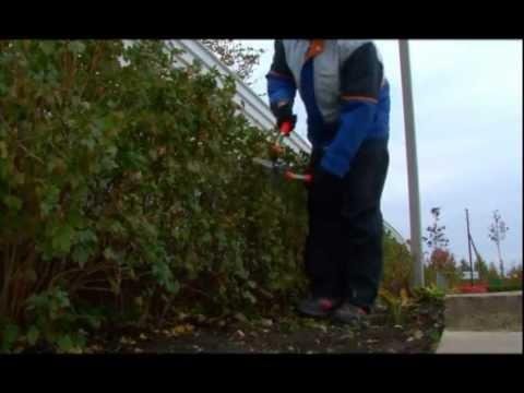 Вопрос: Когда стричь живую изгородь из ирги?