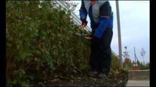видео Живая изгородь, уход за живой изгородью