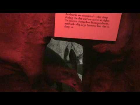 Philadelphia Zoo Aardvarks Kiss Goodnight