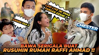 CHESTER SI SERIGALA GREBEK RUMAH RAFFI AHMAD DAN RANS ENTERTAINMENT !! SEMUA KOCAR KACIR KETAKUTAN !