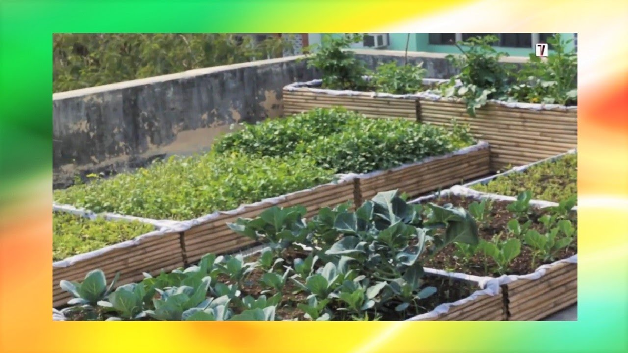 How To Setup Rooftop Kitchen Garden Step By Step Instructions Youtube