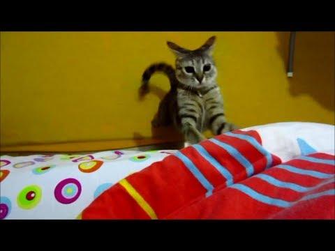 Cat's adrenaline rush