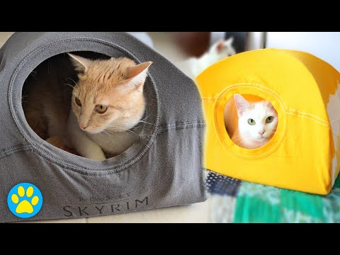 does-this-pin-work?-|-diy-cat-tent
