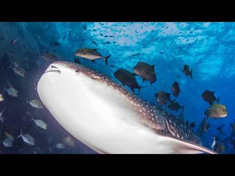 Mexico creates huge national park to protect marine life, Revillagigedo Archipelago
