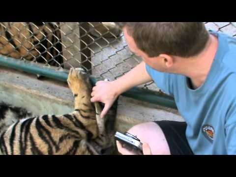 Tiger Foot Massage