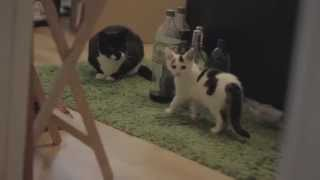 new kitten meets cat