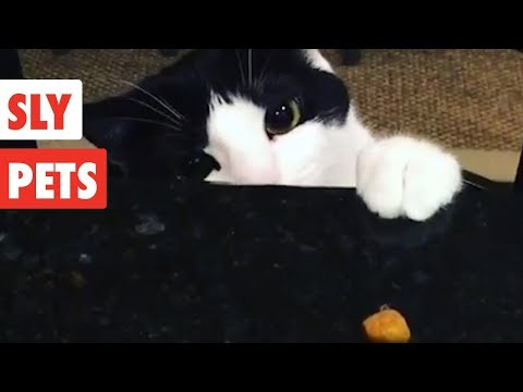 Sly Pets | Funny Pet Video Compilation 2017