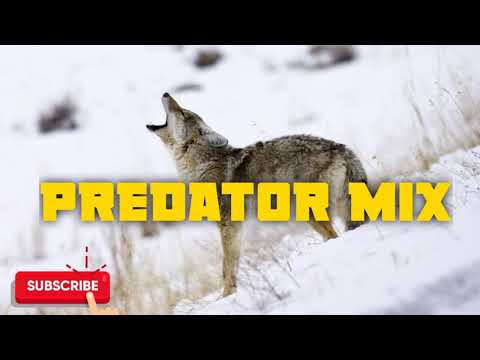 Predator Hunting Call Mix Sequence #3 - Free Download