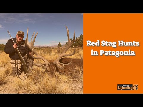 Red Stag Hunts In Patagonia With Algar