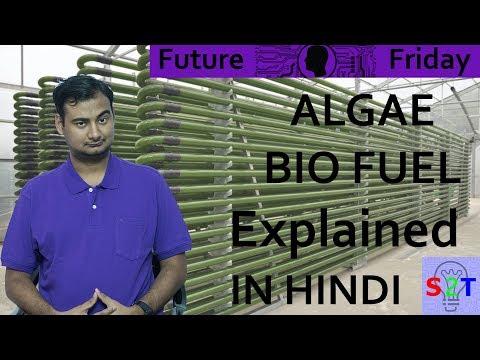 Future Friday (Algae Biofuel In HINDI)