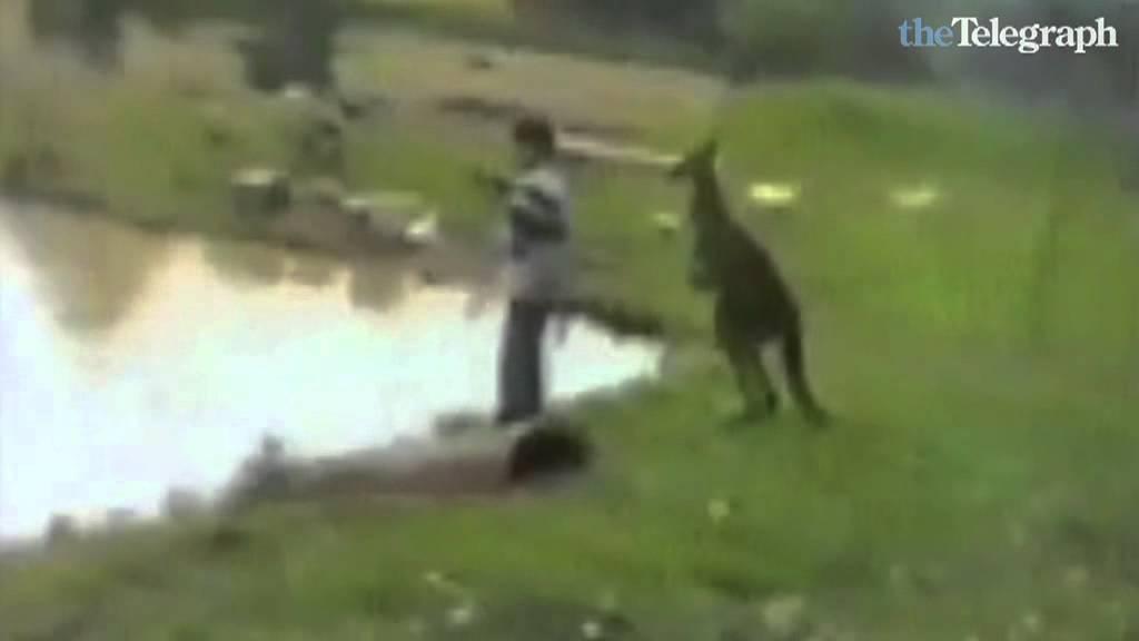 Watch free animal sex online in Australia