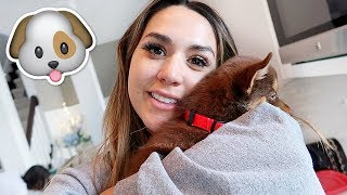 A NEW PUPPY | ALEX AND MICHAEL VLOGMAS!