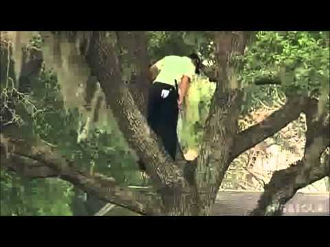 Sergio Garcia Tree Shot!