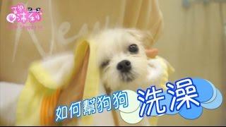 How to Bath your Dog! |【沛莉寵物】教你幫狗狗洗澡/清耳朵/吹風,第一次就上手! | 沛莉 Peri