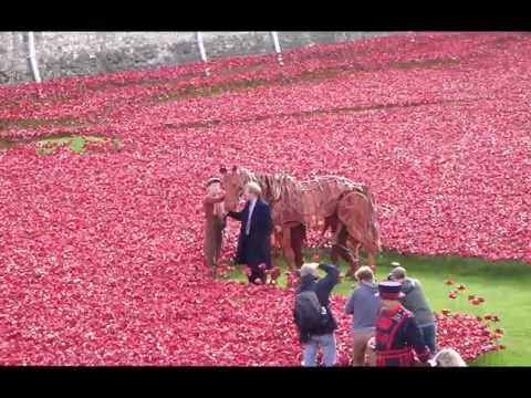 Ceramic Poppies At The Tower Of London 19th October 2014