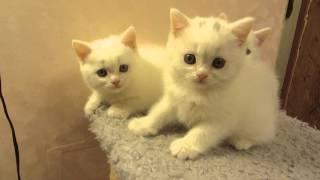Милые Котики: Маленькие Котята, Игривые и Пушистые
