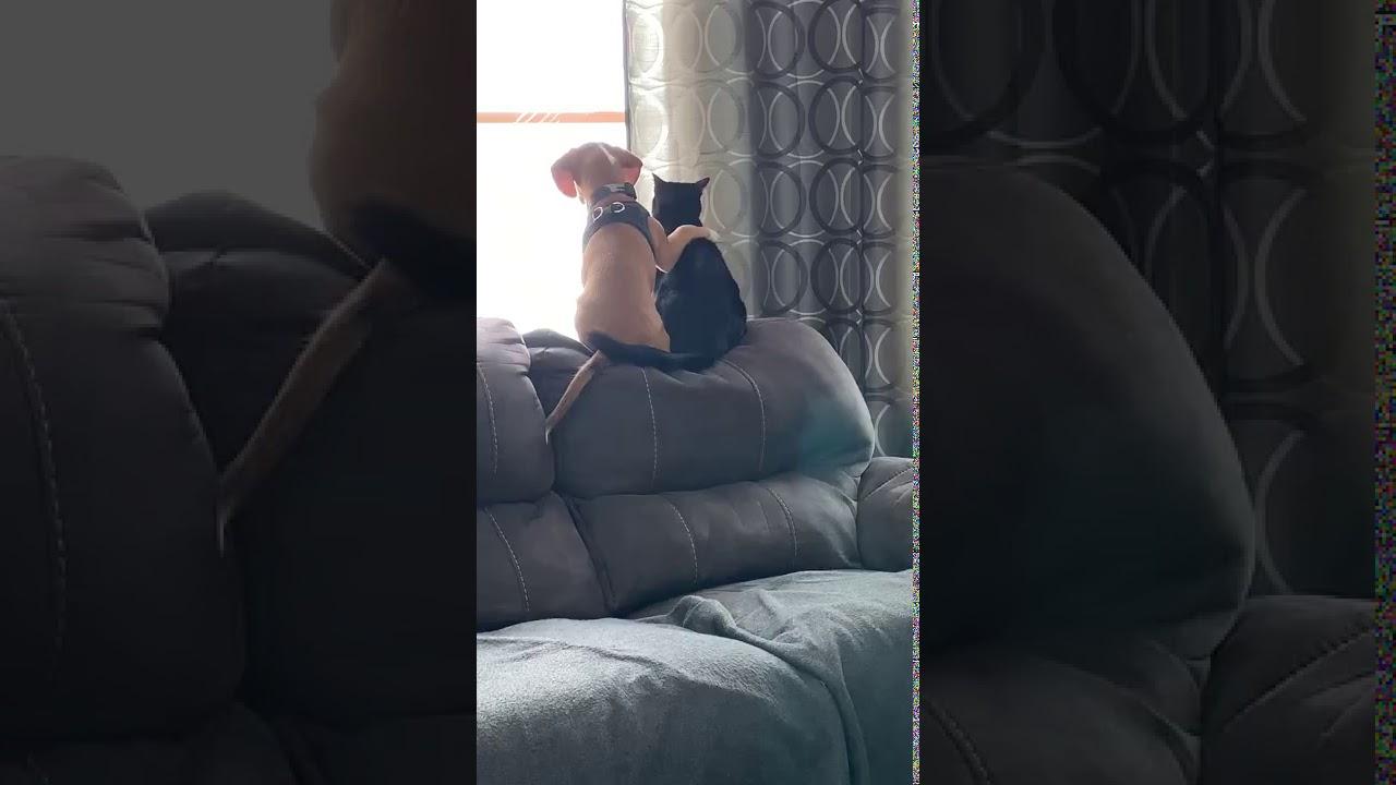 Собака и кошка лучшие друзья. Cat and dog. - YouTube