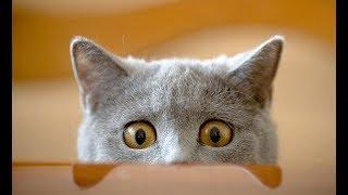 Самые прикольные кошки. Падающие коты