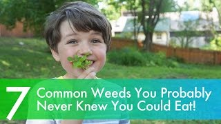 7 delicious common weeds you probably never knew you could eat!