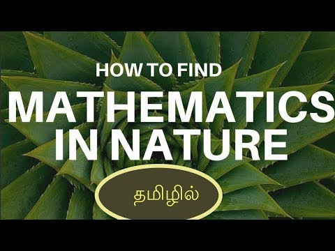 Have you ever observed Maths in Nature? | Tamil Science