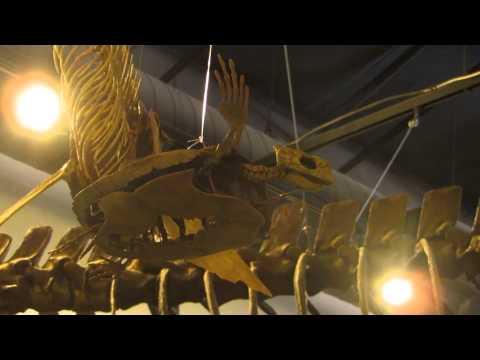 Chelosphargis advena - Triebold Paleontology