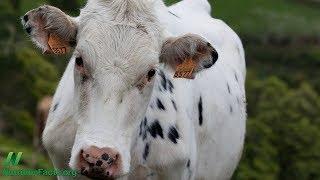 Mléko narušuje hormonální rovnováhu těla