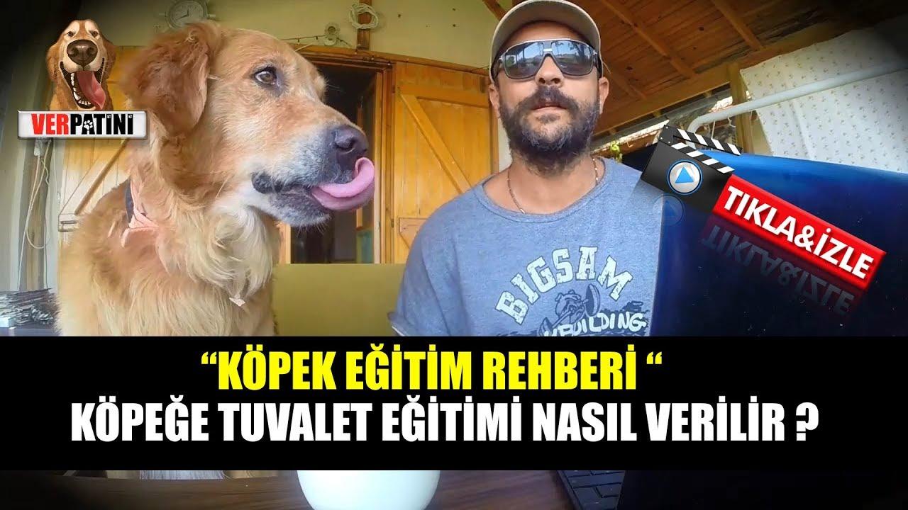 Köpek Eğitimi Nasıl Verilir