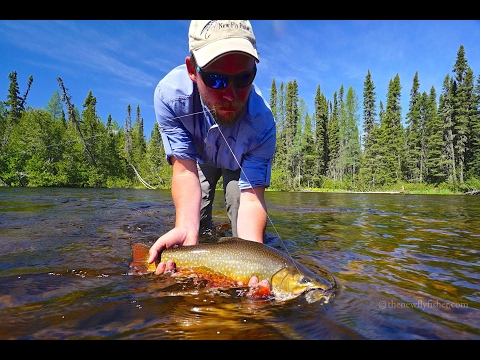 Brook Trout On A Fly | Ontario