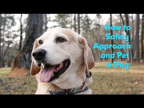How to Safely Approach and Pet a Dog