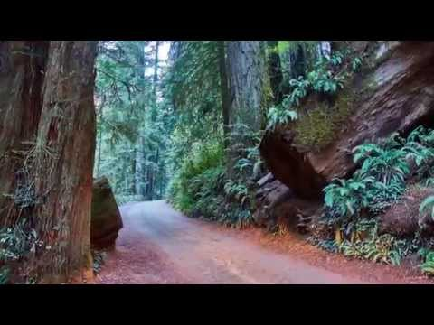 Northern California Coastal Redwoods