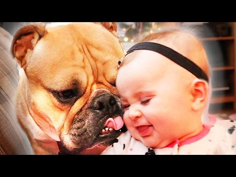 A Little Girl & A Bulldog Are Best Friends