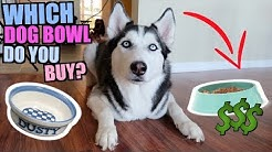 Which Dog Bowl Should You Buy For Your Husky/Dog? (Reviewing All Dog Bowls)