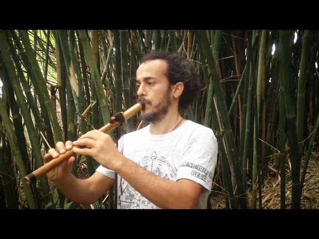 Flauta Nativa River Cane A