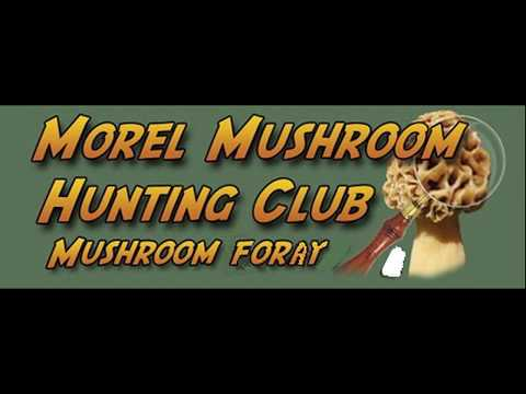 2019 Hoosier National Forest Mushroom Hunt And Cooking Demo With Chris Matherly
