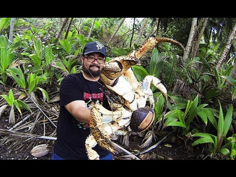 Holy Crab! Christmas Island Tourist Mark Pierrot Pictured with Giant Coconut Crab