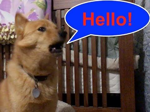 MY DOG TALKS! ep. 2